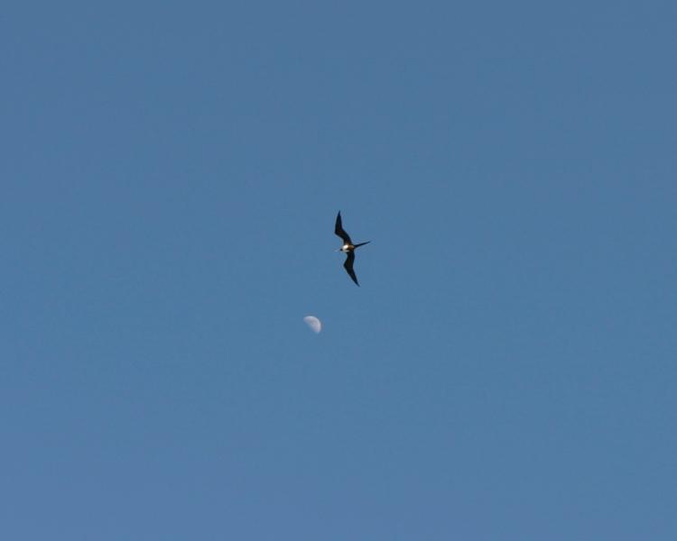 tern moon