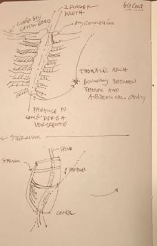 thorax-scapula-and-hips-6