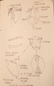 thorax-scapula-and-hips-7